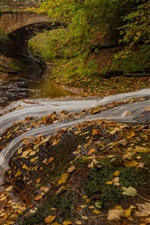 Preview iPhone wallpaper England, Cumbria, river, yellow leaves, autumn