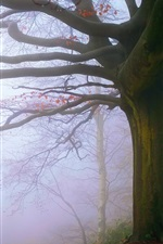 Preview iPhone wallpaper England, Malvern Hills, tree, fog, morning