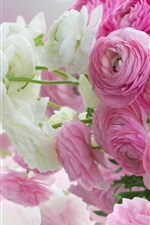 Preview iPhone wallpaper Flowers close-up, pink and white peonies