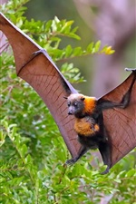 Preview iPhone wallpaper Flying bat, wings, bushes