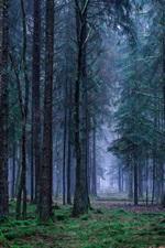 Preview iPhone wallpaper Forest, grass, fog, dawn