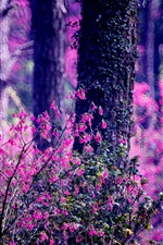 Forest, pink flowers, trees, blurry