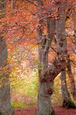 Preview iPhone wallpaper Forest, red leaves, trees, autumn