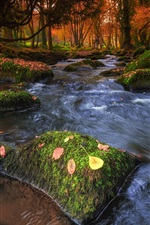 Preview iPhone wallpaper Forest, stream, stones, moss, autumn
