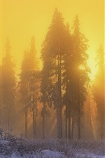 Preview iPhone wallpaper Forest, trees, snow, winter, sunrise, sun rays, fog, morning