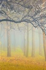 Forest, trees, white flowers, fog, morning