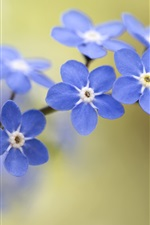 Preview iPhone wallpaper Forget-me-not, blue flowers, bokeh