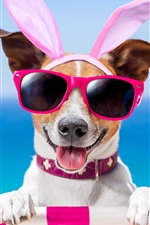 Preview iPhone wallpaper Funny dog, glasses, butterfly, summer