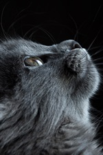 Preview iPhone wallpaper Gray cat look up, black background
