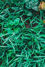Preview iPhone wallpaper Green grass, plants, water drops