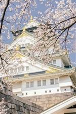 iPhone обои Япония, парк замка Осака, храм, цветение сакуры, весна
