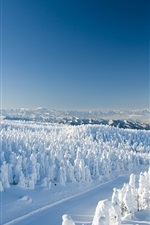 Japan, Yamagata, snow, trees, winter
