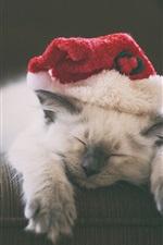 Kitten sleeping, hat, furry