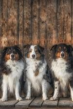 Muitos cachorros sentam-se em uma linha