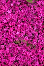 Preview iPhone wallpaper Multitude pink flowers bloom