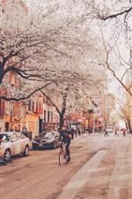 New York, street, flowers, city, USA