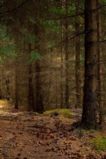 Preview iPhone wallpaper Norway, Nordland, forest, trees, sunshine