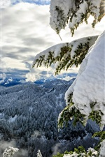 Preview iPhone wallpaper Okanogan-Wenatchee National Forest, Cascade Range, thick snow, trees, winter