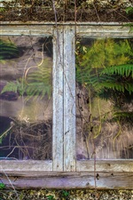 Preview iPhone wallpaper Old house window, fern