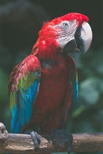 Preview iPhone wallpaper Parrot, colorful feathers, macaw