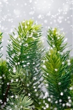 Preview iPhone wallpaper Pine tree, snowflakes, winter
