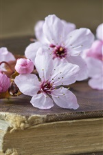 Pink cherry flowers, book