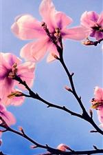 iPhone壁紙のプレビュー ピンクの花、マグノリア、春、青空