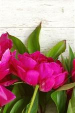 iPhone壁紙のプレビュー ピンクの牡丹、花、木の背景