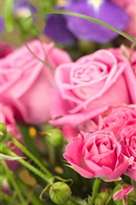 Pink roses, bouquet