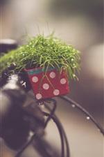 iPhone fondos de pantalla Plantas, bicicleta, lluvia