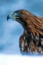 Preview iPhone wallpaper Predator, eagle, beak, blue background