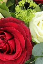Preview iPhone wallpaper Red and white roses, flowers, bouquet