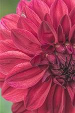 Preview iPhone wallpaper Red dahlia macro photography, petals