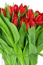 Preview iPhone wallpaper Red tulips, vase, white background