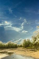iPhone fondos de pantalla Cañas, hierba, estanque, nubes, sol
