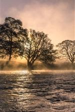 River, trees, fog, morning
