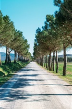 Road, trees, countryside