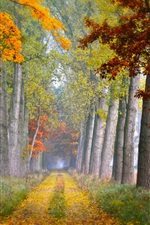 Preview iPhone wallpaper Road, trees, grass, autumn, fog, morning