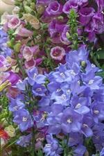 Salpiglossis, beautiful bells flowers, colorful