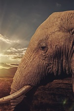 Preview iPhone wallpaper Savanna, elephant, sunset