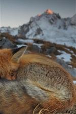 Preview iPhone wallpaper Savoie, France, fox, snow, winter