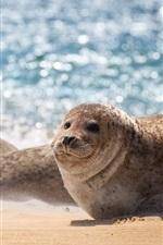 Preview iPhone wallpaper Sea, seal, beach