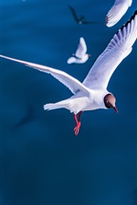 Preview iPhone wallpaper Seagulls flight, birds, sea