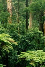 Preview iPhone wallpaper Sherbrooke, Victoria, Australia, forest, trees, green