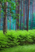 Preview iPhone wallpaper Spring, forest, trees, haze, green
