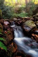 Stones, stream, plants, forest