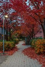 Suécia, Estocolmo, rua, casas, árvores, outono