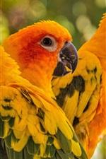 Three birds, parrot