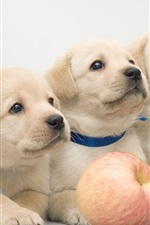 Preview iPhone wallpaper Three puppies and an apple