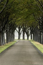 Preview iPhone wallpaper Trees, road